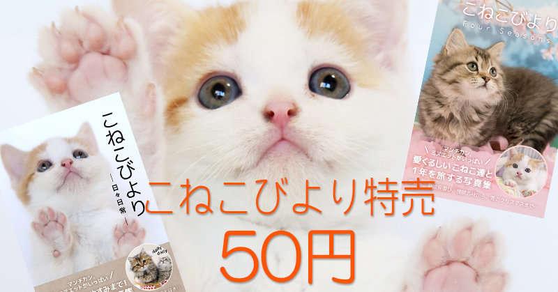 【特売50円】こねこびより特売!!いまだけお得に癒されるチャンス!
