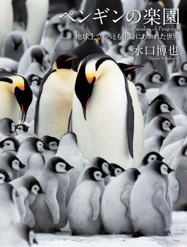 ペンギンの楽園 地球上でもっとも生命にあふれた世界 漫画