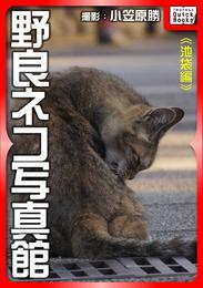 野良ネコ写真館【池袋編】 漫画