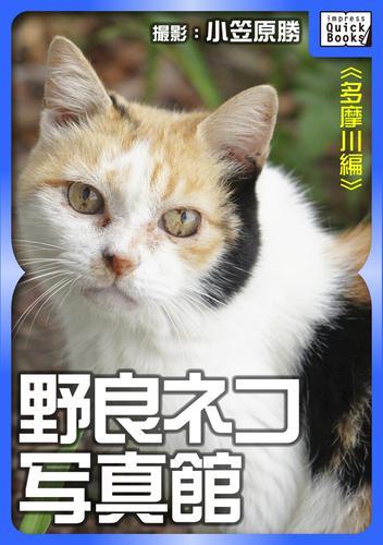 野良ネコ写真館【多摩川編】 漫画