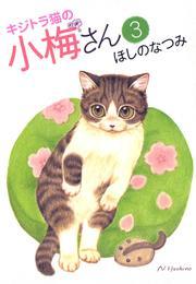 キジトラ猫の小梅さん(3) 漫画
