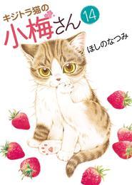 キジトラ猫の小梅さん(14) 漫画